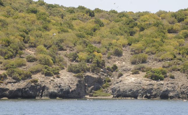 El fiscal investiga las jaulas para criar aves en la isla del Barón