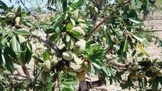 El PP pide un paquete de medidas urgentes para los agricultores afectados por la granizada