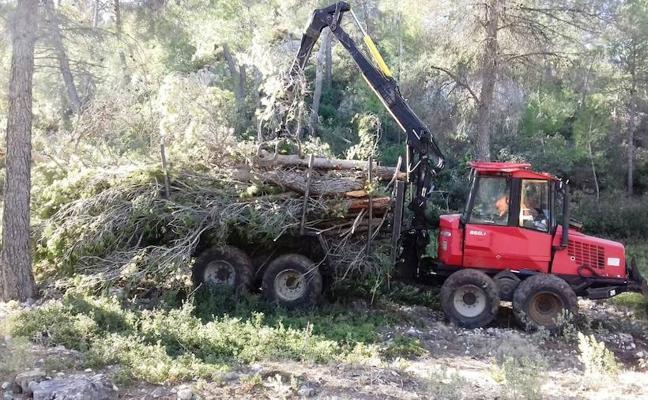 La Comunidad desarrolla trabajos de prevención de incendios con aprovechamiento de la biomasa
