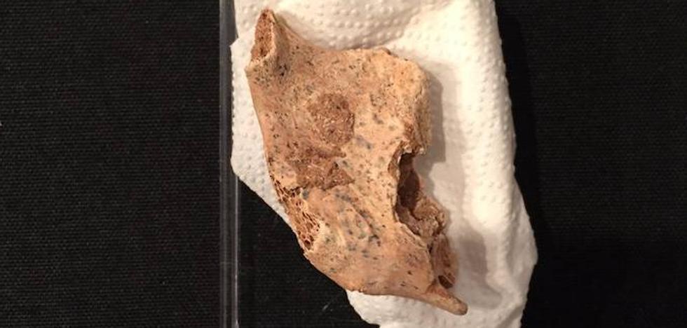 Encuentran la mandíbula de un niño neandertal en la Sima de las Palomas