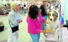 La Exposición Internacional Canina reúne miles de mascotas en Ifepa