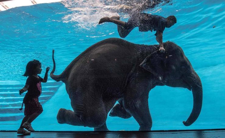 La elefanta que creía ser sirena