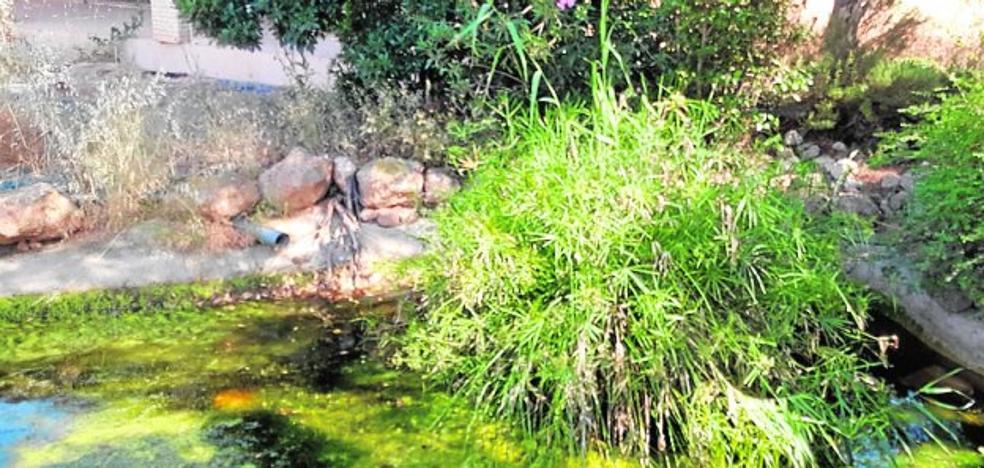 El mosquito tigre se hace 'okupa' en un chalé abandonado