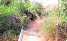 Huermur denuncia el abandono del corredor verde del río Segura