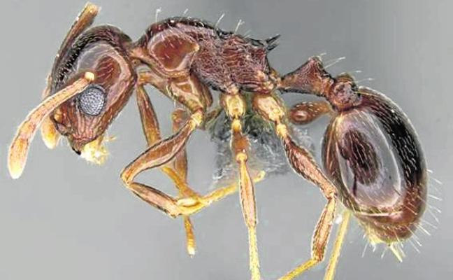 A las hormigas también les gusta trasnochar