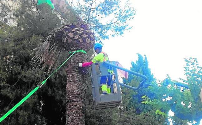 El riego aumenta en dos horas para combatir el estrés hídrico y evitar las caídas de árboles