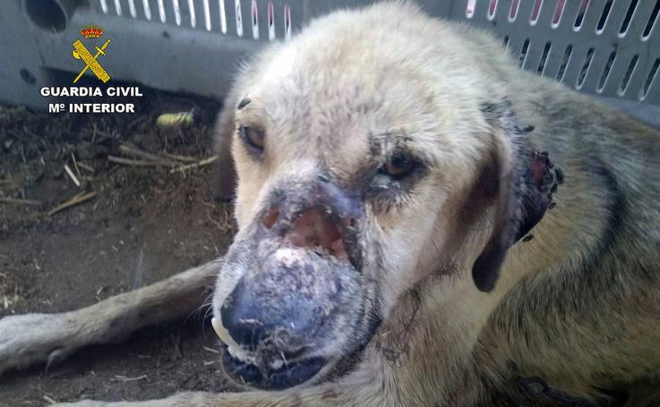 Rescatan a una treintena de animales maltratados en Monteagudo