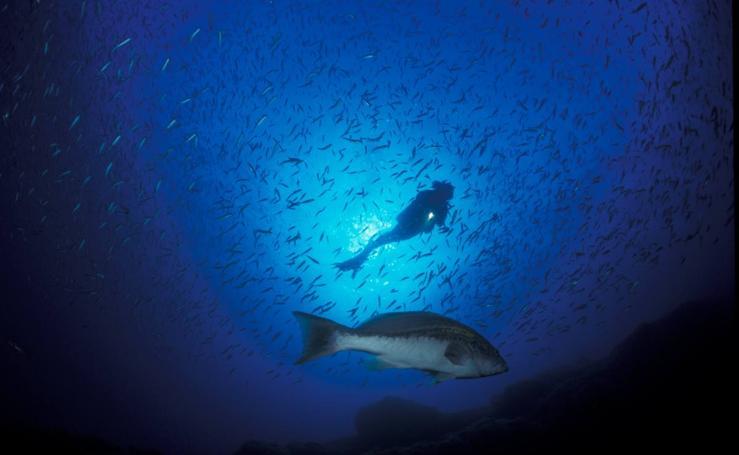 Un filón bajo el mar