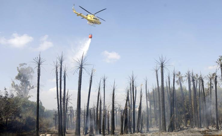Extingen un incendio junto a un vivero en Molina de Segura