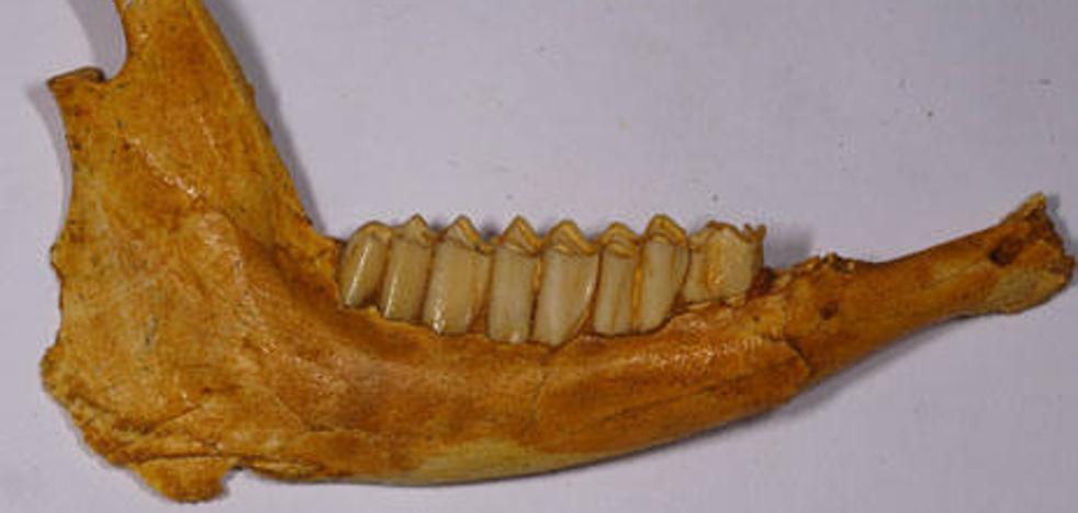 Así era la fauna en Murcia hace 4 millones de años
