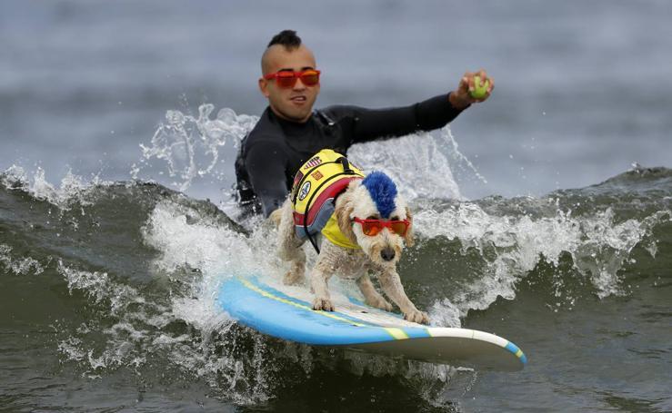 Perros surferos