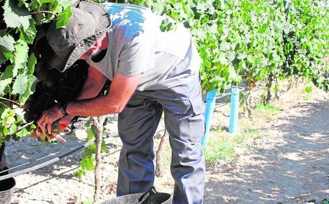 La vendimia se adelanta dos semanas por las altas temperaturas y la falta de agua