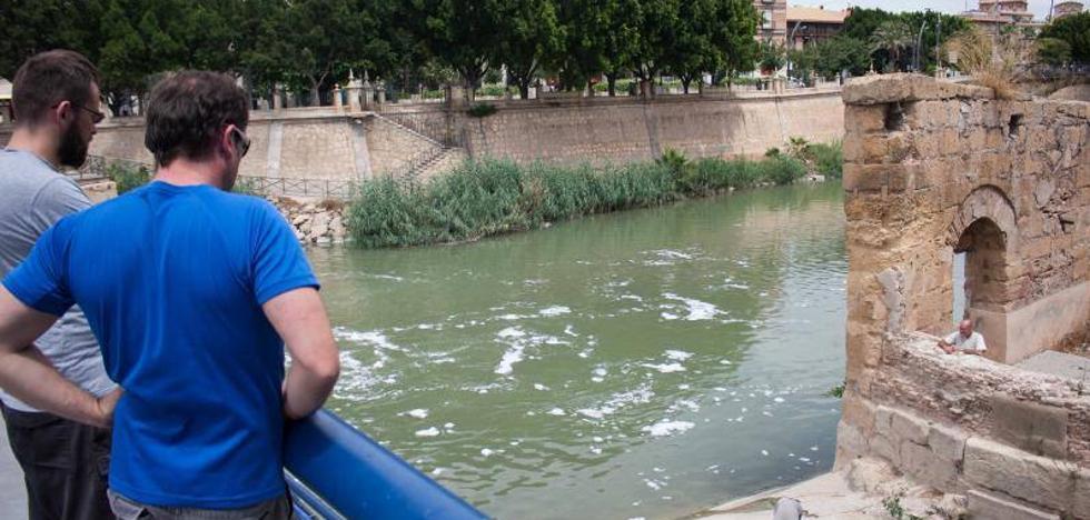 Huermur denuncia ante el Seprona la aparición de peces muertos en el Segura