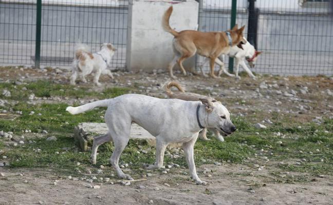 Los parques con más de 1.500 metros de superficie reservarán espacio para los perros