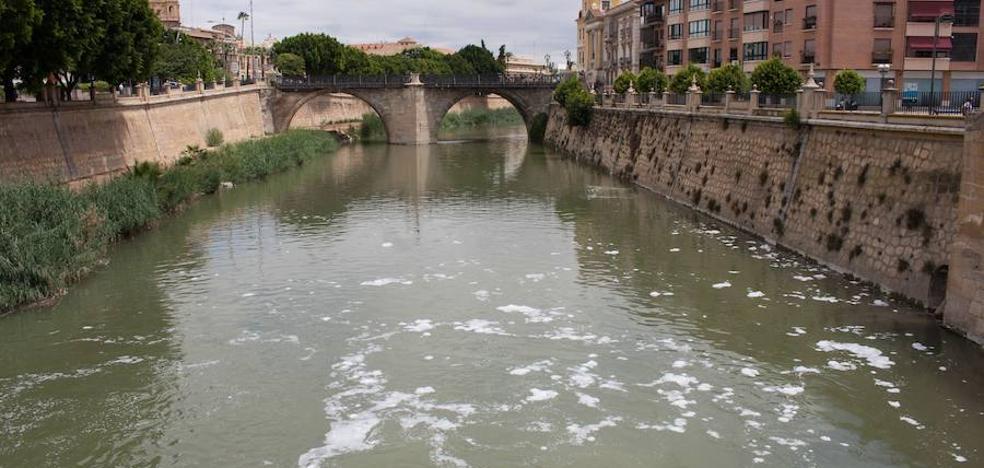 Ahora Murcia y Cs piden explicaciones a la CHS por los peces muertos en el Segura