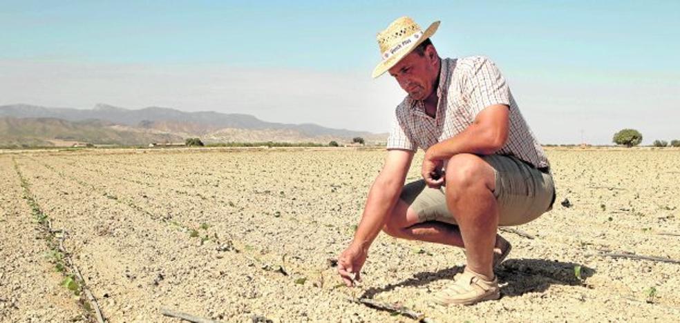 La falta de agua obliga a llevarse fuera el 30% de la producción agrícola