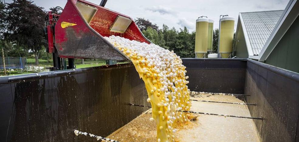 Retirada en Cataluña una partida de huevos contaminados