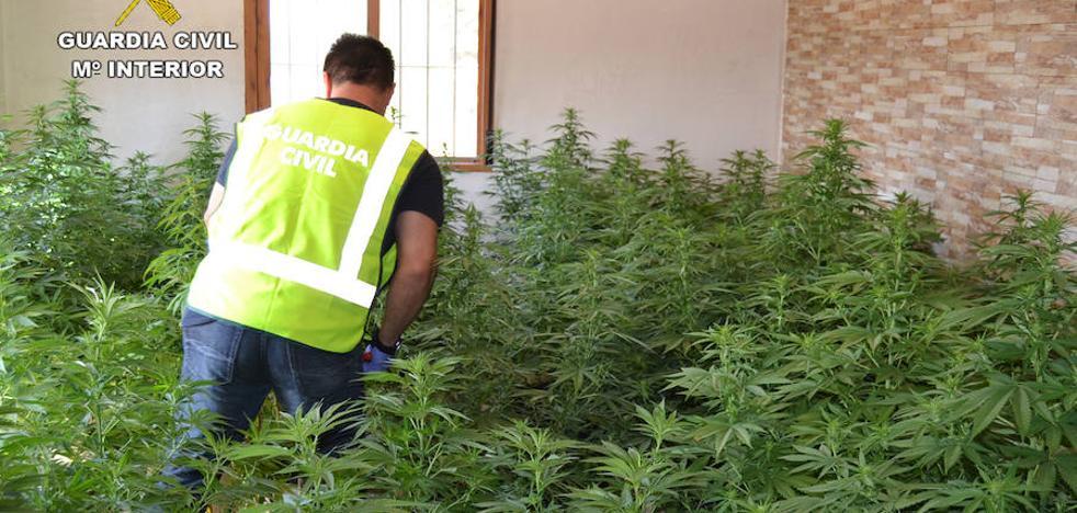 Desmantelan un clan familiar dedicado al cultivo de marihuana en Sangonera la Seca