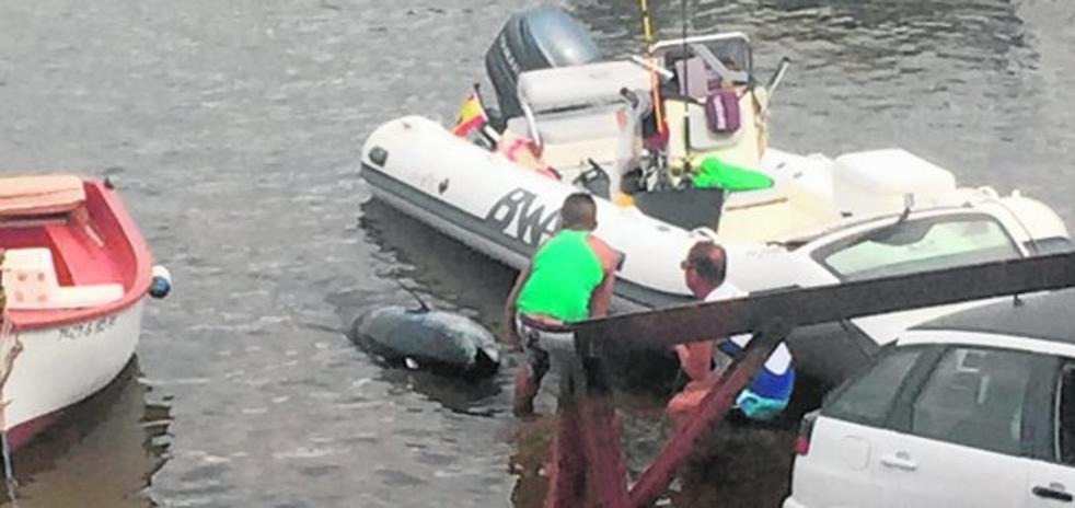 Un atún 'gigante' en el maletero de un Seat Ibiza