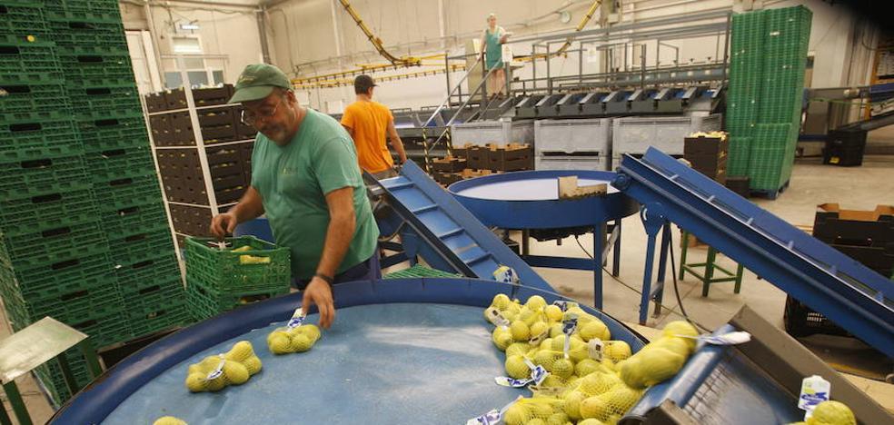 Murcia es la tercera comunidad con mayor crecimiento en sus exportaciones en el primer semestre