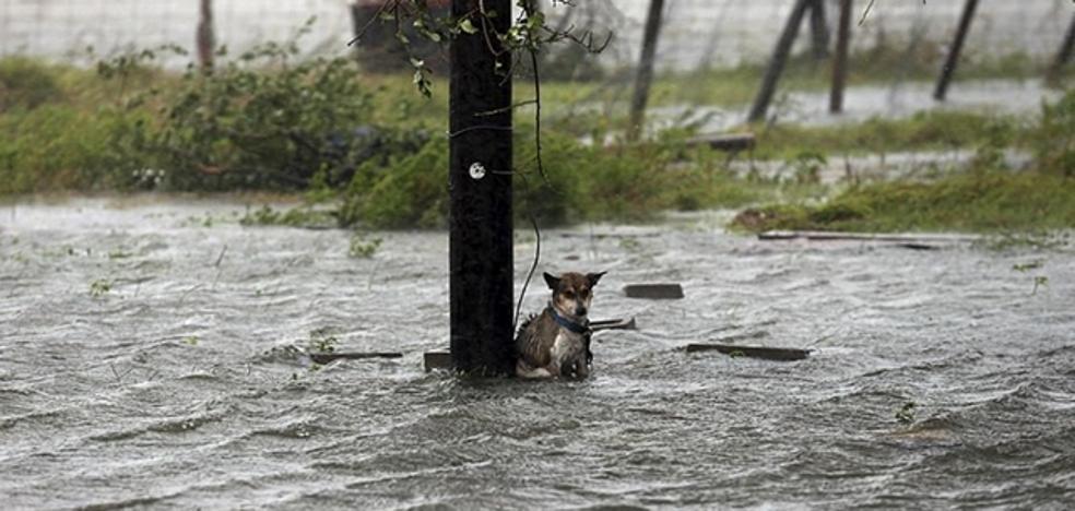 Denuncian el abandono de perros atados durante la tormenta Harvey