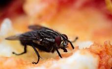 Qué pasa cuando una mosca se posa en la comida