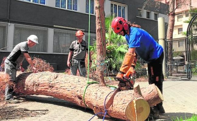 La entrada de La Cubana se queda sin los tres pinos plantados hace medio siglo