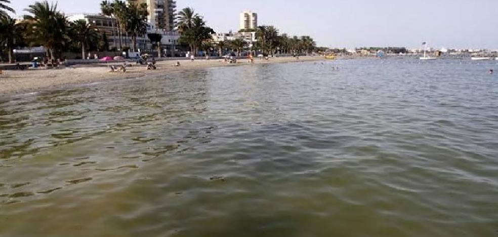 «Peligro de muerte» de flora y fauna por la contaminación del Mar Menor