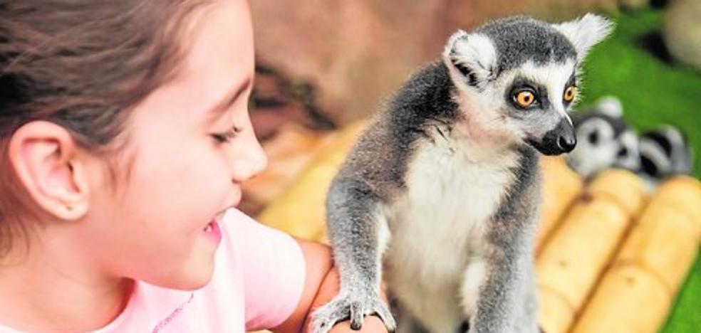 Mundomar lanza un programa educativo de interacción con animales