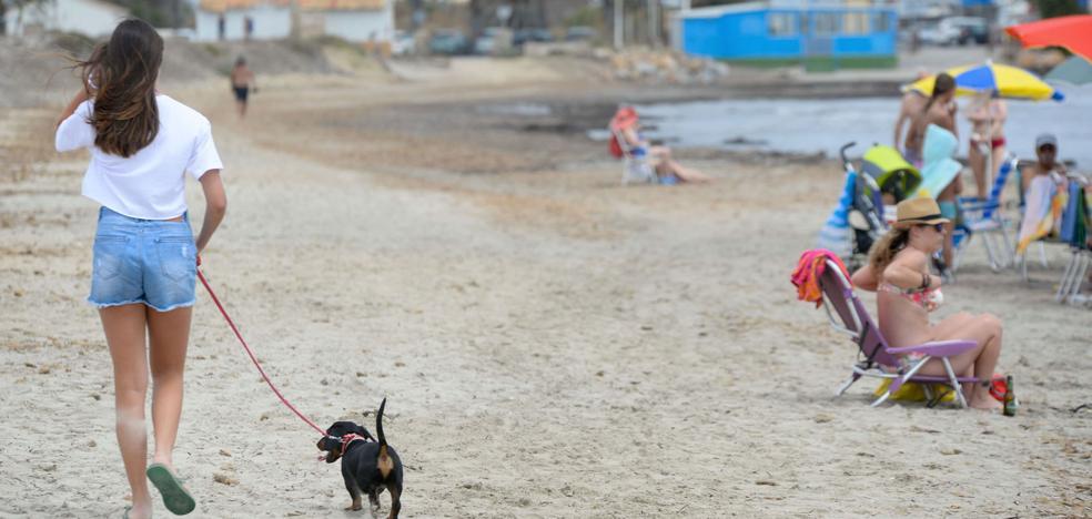 La Policía impone casi 80 multas este verano por llevar animales a las playas