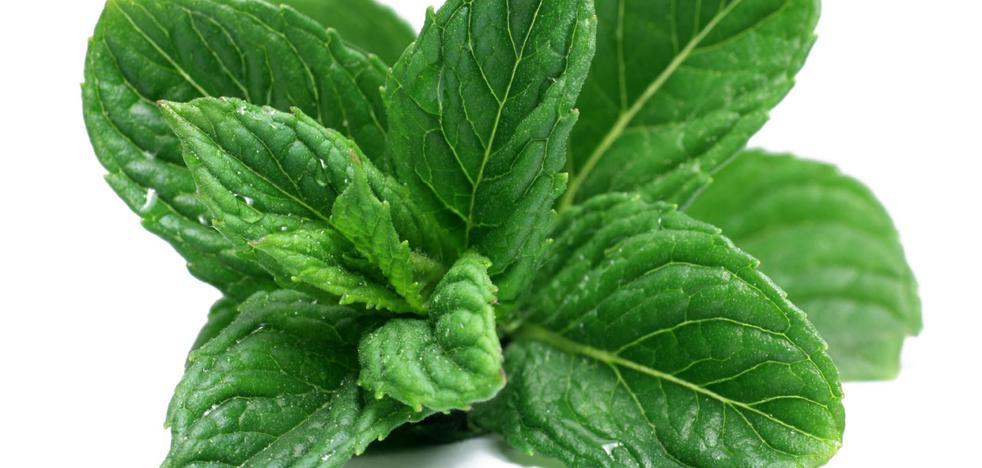 Enfermos de alzéhimer harán terapia con plantas aromáticas de la UPCT