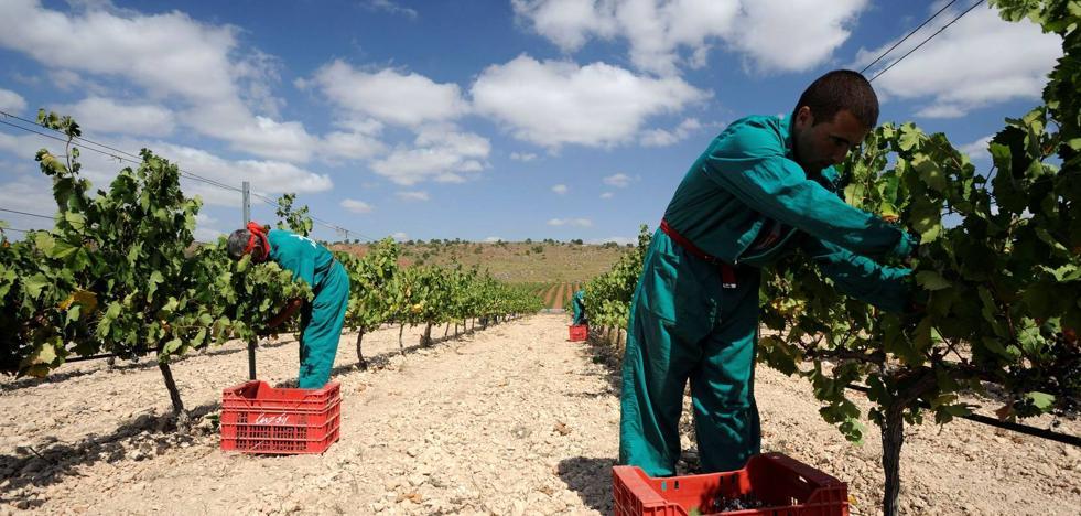 Bodegas Luzón venderá 770.000 botellas de vino ecológico este año