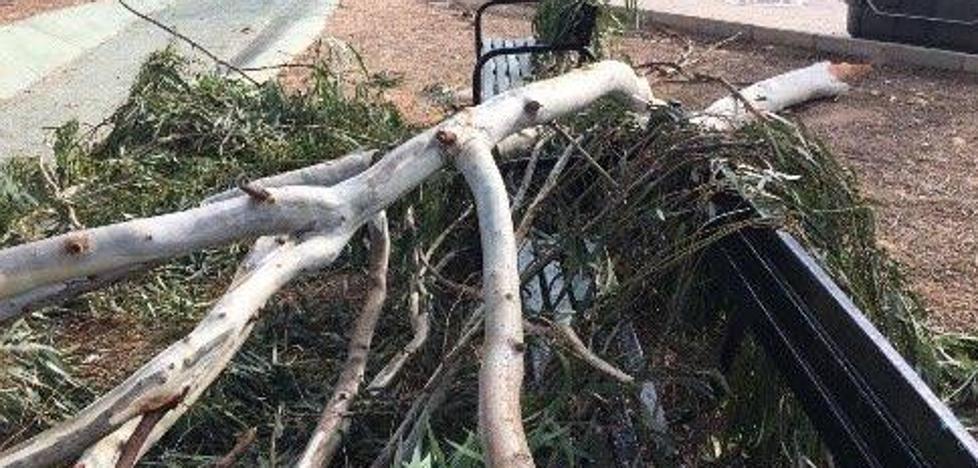 El PP denuncia la caída de ramas en Alumbres y exige el mantenimiento de los árboles