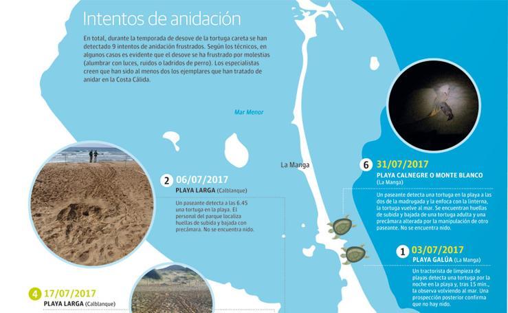 Intentos de anidación de la tortuga boba en el litoral de la Región