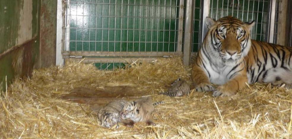 Los circos con animales silvestres estarán prohibidos en la Región
