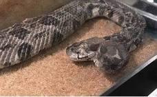 Un electricista se encuentra una serpiente de dos cabezas