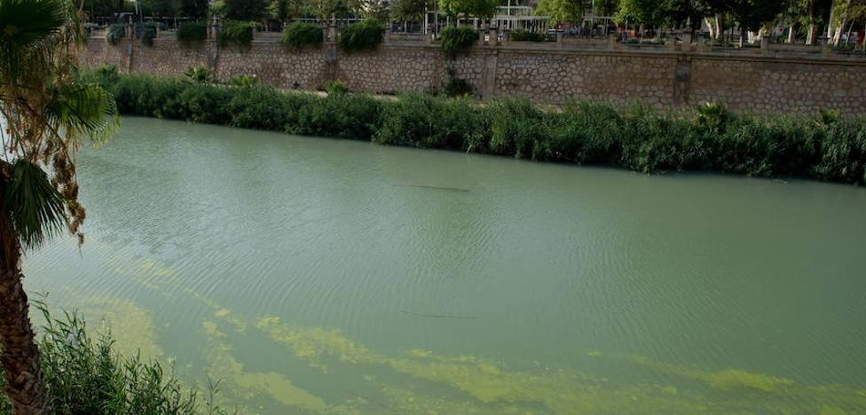 La CHS descarta que el color verde del Segura del pasado julio se debiera a vertidos