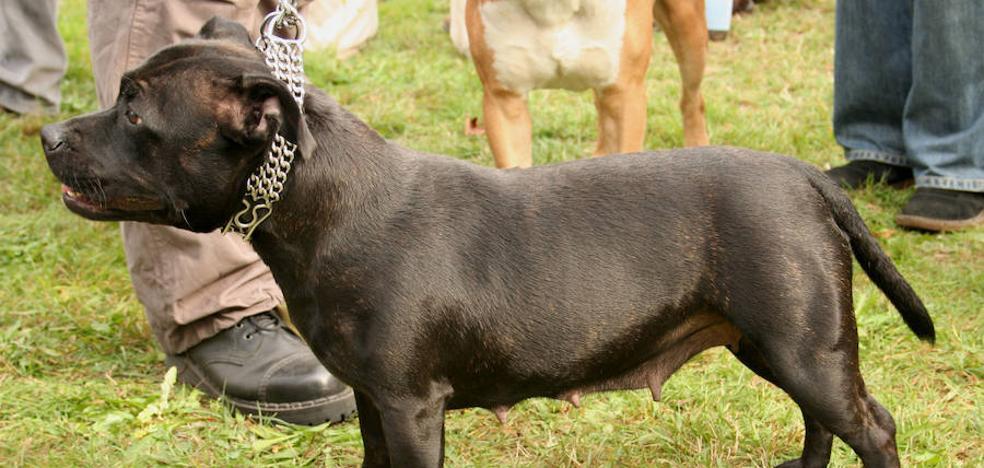 Un perro drogado mata a su dueño cuando rodaban un documental antidrogas