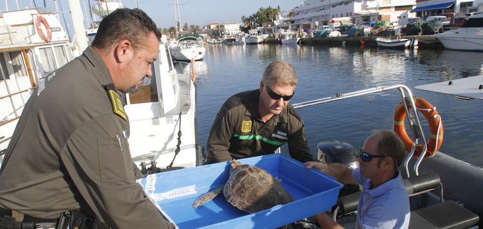 Liberan a una tortuga boba en Cabo de Palos que llevaba un anzuelo en el ojo