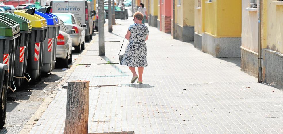 Talan chopos en riesgo de caída, en Ciudad Jardín