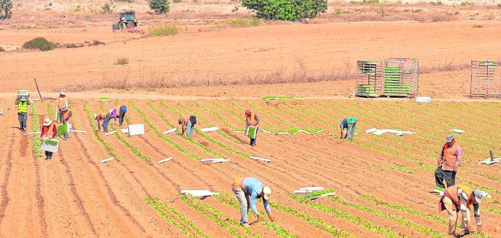 La falta de agua obliga a los agricultores a sembrar solo la mitad que otros años