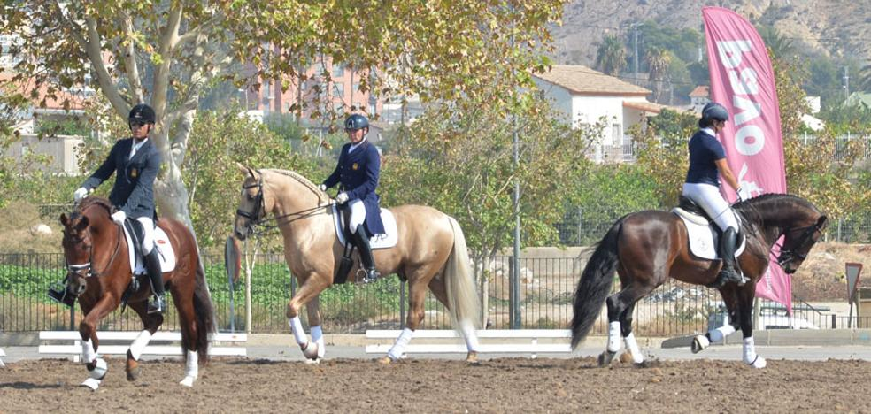 Trescientos caballos participan en los concursos del certamen Fericab