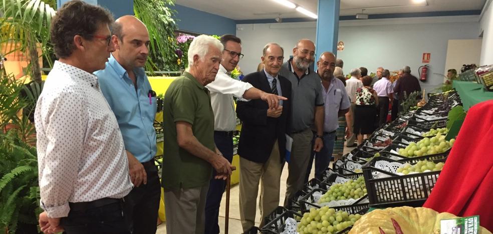 La uva de mesa se convierte en el 'maná' agrícola del Bajo Guadalentín