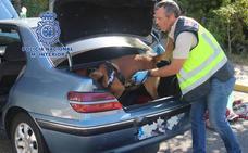 El olfato de un perro policía da con 54.000 euros ocultos en dos vehículos en Librilla