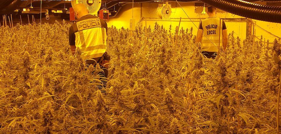 Detenidos dos holandeses en Lorca por el cultivo de 4.300 plantas de marihuana