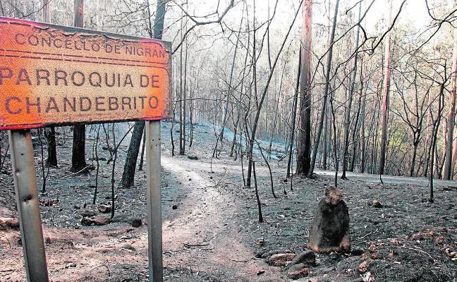 La proliferación de especies pirófitas enfrenta a los gallegos