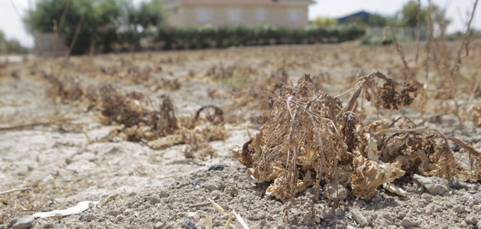 El Taibilla pedirá a los alcaldes que recorten el consumo de agua