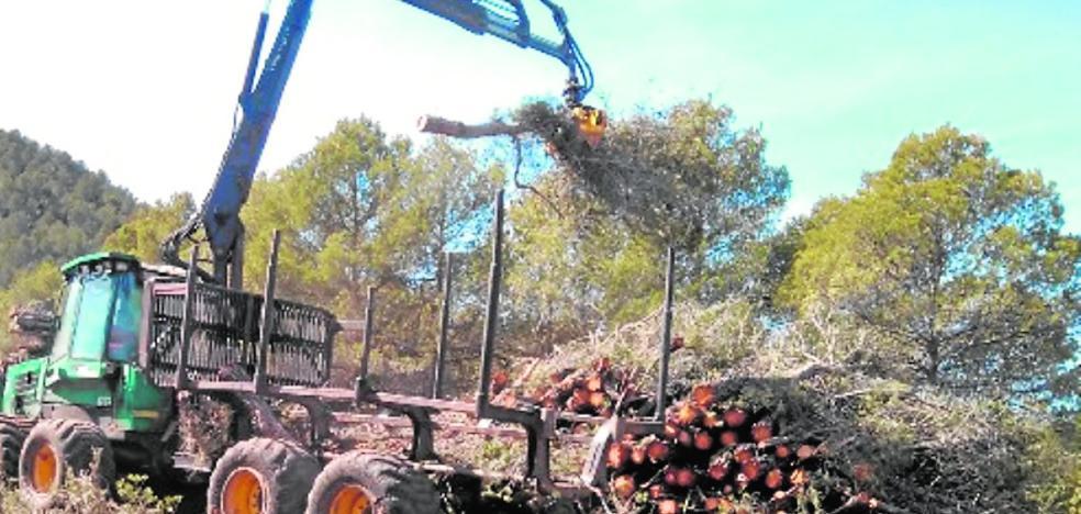 Cuarenta desempleados acondicionarán los montes de Caravaca, Cehegín y Mula