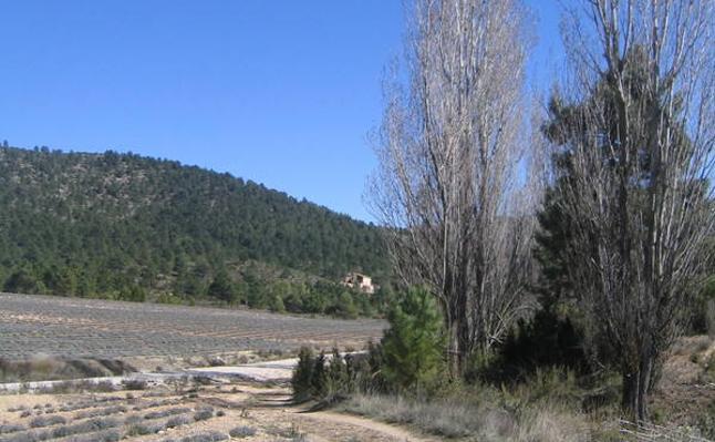 Más arriba, Campo de Béjar