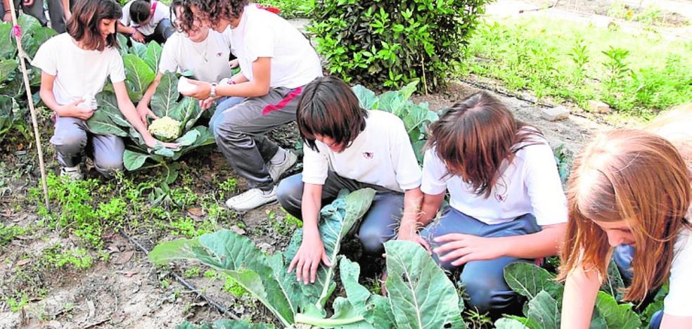 Alumnos murcianos enviarán 'bombas de semillas' a colegios de Galicia para reforestar